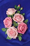 Arrangement of roses. On a blue background Stock Images