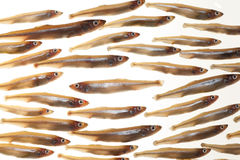 Arrangement of small fish (smelts) 7 Royalty Free Stock Photo