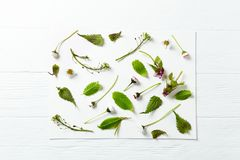 An arrangement of spring plants and flowers. Top view. Copy space. Horizontal Stock Photography