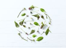An arrangement of spring plants and flowers royalty free stock photos
