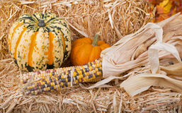Arrangement of Squash, Pumpkin and Corn Stock Images