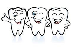 Arrangement of the teeth Stock Photography