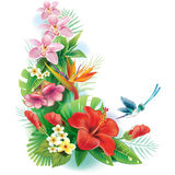 Arrangement from tropical flowers. And leaves Stock Image