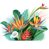 Arrangement from tropical flowers Stock Image