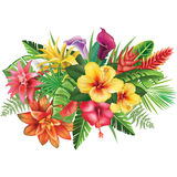 Arrangement from tropical flowers Royalty Free Stock Photography