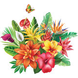 Arrangement from tropical flowers Stock Photography