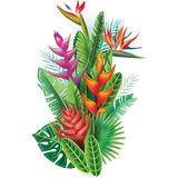Arrangement from tropical plants Royalty Free Stock Image