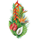 Arrangement from tropical plants Royalty Free Stock Photos