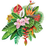 Arrangement from tropical plants Stock Image