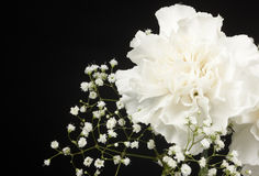 Arrangement of White Carnations and Baby's Breath Stock Image
