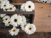 Arrangement of white gerbera flowers in a metal box. Arrangement of white gerbera flowers in small glass vases standing in a tin box Royalty Free Stock Photo