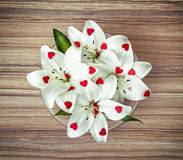 Arrangement of white lilies with more little red hearts in the g Royalty Free Stock Images