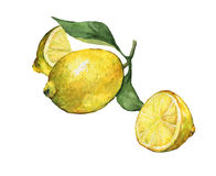 Arrangement with whole and slice fresh citrus fruit lemon with green leaves and flowers. stock illustration
