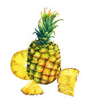 Arrangement with whole and slice pineapple. Royalty Free Stock Images