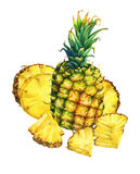 Arrangement with whole and slice pineapple. vector illustration