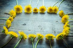 Arrangement of yellow dandelions in frame shape on dark backgrou Stock Photo