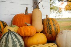 Arrangement of Yellow and Orange Pumpkins and Squash Royalty Free Stock Images