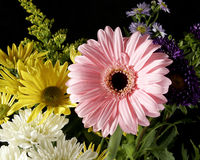 Arrangements blooming bouqet flowers. Wild pink royalty free stock photo