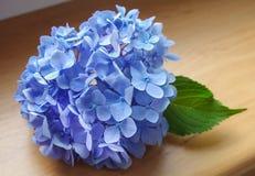Still life with hydrangeas royalty free stock photos