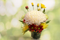 Arrangements, decorative Stock Photos
