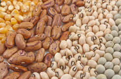 Arranges seeds Royalty Free Stock Photo
