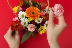 Arranging flowers Stock Photography