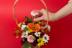Arranging flowers Royalty Free Stock Photo