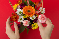 Arranging flowers Royalty Free Stock Images
