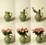 Arranging Flowers Sequence. Time lapse sequence compilation of 6 photo's, arranging roses in a vase Stock Photos
