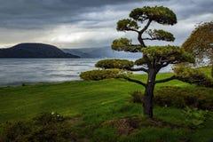 Arranging of pine tree with rainy day at lake toya hokkaido japan stock photo