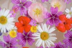 Arrangment λουλουδιών Στοκ φωτογραφίες με δικαίωμα ελεύθερης χρήσης