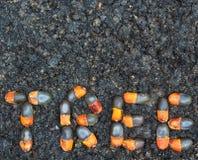 Arrangment των σπόρων xylocarpa Afzelia Στοκ φωτογραφία με δικαίωμα ελεύθερης χρήσης