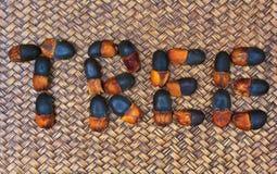 Arrangment Afzelia xylocarpa ziarna Obraz Royalty Free