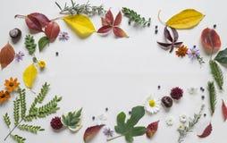 Arrangment créatif fait de feuilles d'automne photos stock