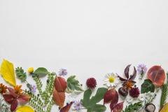Arrangment creativo hecho de las hojas de otoño fotos de archivo