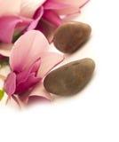 Arrangment de la magnolia Fotografía de archivo