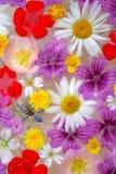 Arrangment del fiore Fotografia Stock