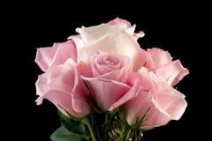 Arrangment delle rose Fotografie Stock Libere da Diritti