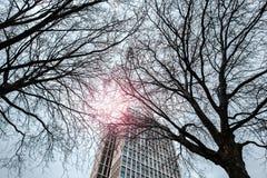 Arranha-céus velho no fundo de duas árvores com efeito do filtro do alargamento da lente fotografia de stock