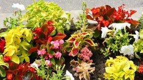 Arranjament λουλουδιών στον κήπο μου Στοκ Εικόνες