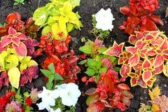 Arranjament λουλουδιών στον κήπο μου Στοκ φωτογραφίες με δικαίωμα ελεύθερης χρήσης