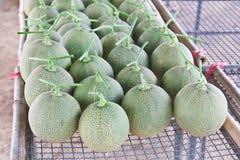 Arranje dos melões japoneses colhidos fotos de stock royalty free