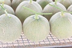 Arranje dos melões japoneses colhidos dos almíscares fotografia de stock royalty free