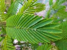 Arranjo bonito do verde no amaranto da folha fotos de stock