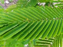 Arranjo bonito do verde no amaranto da folha imagens de stock royalty free