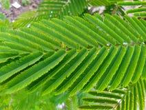 Arranjo bonito do verde no amaranto da folha foto de stock
