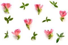 Arranjo com flores e folhas no fundo branco Foto de Stock Royalty Free