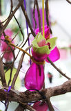 Arranjo com orquídea amarela Fotografia de Stock Royalty Free