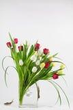 Arranjo da tulipa com lesmas Imagens de Stock Royalty Free