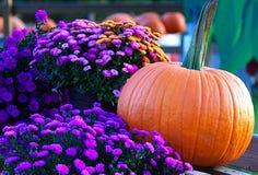 Arranjo das flores e de uma abóbora Fotos de Stock Royalty Free